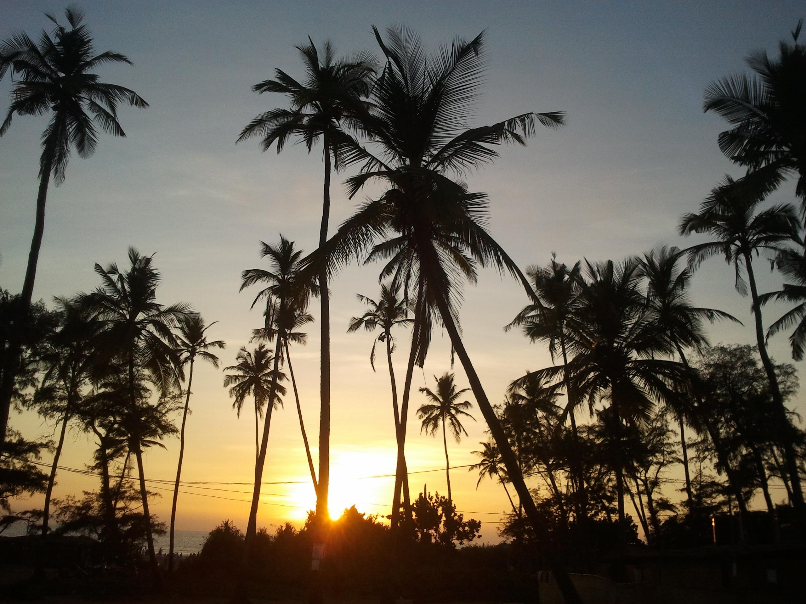 Palmen bei Sonnenuntergang in Goa